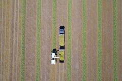 Mähdreschen ein grünes Feld entlädt Weizen Lizenzfreies Stockbild