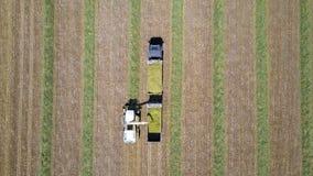 Mähdreschen ein grünes Feld entlädt Weizen Stockbilder