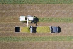 Mähdreschen ein grünes Feld und entlädt Weizen Lizenzfreies Stockbild