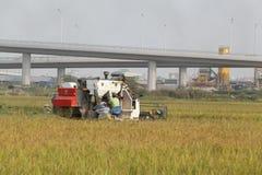 Mähdrescher auf dem Feld, das Reis erntet Lizenzfreies Stockbild