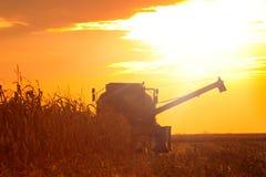 Mähdrescher-Betreiber, der Mais auf dem Feld am Sommer-Abend erntet Lizenzfreies Stockbild