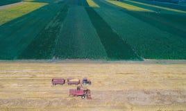 Mähdrescher, der auf dem goldenen Weizengebiet arbeitet Lizenzfreie Stockbilder