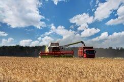 Mähdrescher, der an einem Weizenfeld arbeitet Lizenzfreie Stockfotografie