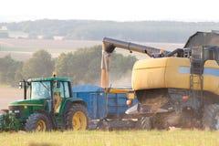 Mähdrescher, der Korn entlädt Stockfoto
