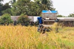 Mähdrescher, der Reis erntet Lizenzfreies Stockfoto