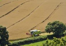 Mähdrescher, der Weizen erntet Lizenzfreie Stockfotos