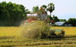 Mähdrescher-maschinelles Ernten in goldenen Paddy Field stockfoto