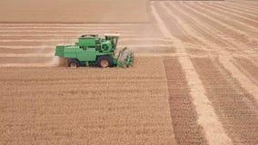 Mähdrescher verschiebt sich auf einem Weizen-Feld Schattenbild des kauernden Geschäftsmannes stock video