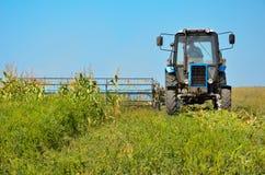 Mähender Mais des alten Traktors in der Feldnahaufnahme Stockfotografie