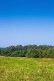 Mähendes Feld am sonnigen Tag Stockfotos