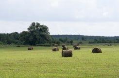 Mähendes Gras auf dem Gebiet Stockfoto