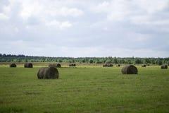 Mähendes Gras auf dem Gebiet Stockfotos