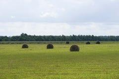 Mähendes Gras auf dem Gebiet Lizenzfreie Stockfotografie