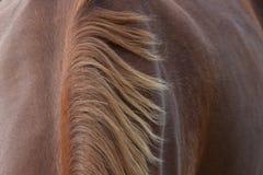 Mähne auf braunem Pferd Lizenzfreie Stockfotos