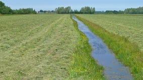 Mähwiese irgendwo im grünen Herzen von Holland stockbilder