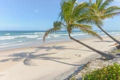 Mäktig paradisstrand på Itacaren Bahia Brazil Royaltyfri Foto