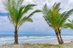 Mäktig paradisstrand på Itacaren Bahia Brazil Royaltyfri Fotografi