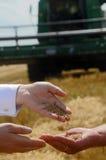 Män häller gömma i handflatan korn Fotografering för Bildbyråer
