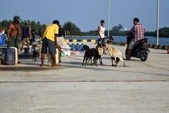 Män handlar i en bred variation av försäljningar på Sebesi skeppsdockor i Lampung, i Indonesien Royaltyfria Bilder