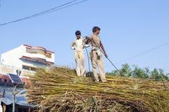 Män laddar sugröret på traktoren efter skörd Royaltyfria Bilder