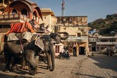 Män på elefanter nära Amer Fort Royaltyfria Bilder