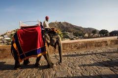 Män på elefanter nära Amer Fort Royaltyfria Foton