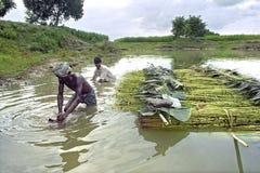 Män som arbetar i jutebransch, Bangladesh royaltyfri foto