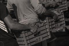 Män som bär druvor i hösten royaltyfria bilder