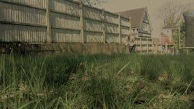 Män som klipper gräs i trädgården stock video