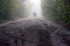 Männer, die einen Warenkorb in einem Deveselu-Wald fahren stockfoto