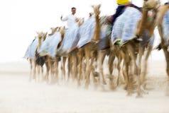 Männer, die Kamele für ein Rennen ausbilden stockbild