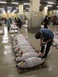 Männer, die Thunfische auf Auktion an Tsukiji-Markt verkaufen lizenzfreie stockbilder
