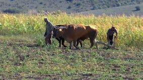 Männer pflügen den Landpflug stock footage