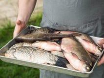 Männer ` s, das Hände einen Behälter mit frisch halten, fischen Stockbild