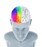 Människa Brain Anatomy Royaltyfria Bilder