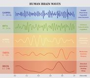 Människa Brain Waves Diagram/diagram/illustration stock illustrationer