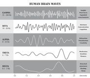 Människa Brain Waves Diagram/diagram/illustration Arkivfoton