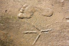 Människa- och fågelfotspår jämförde på våt sand Arkivfoton