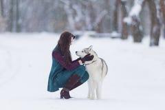 Människa- och husdjurförhållanden Den Caucasian brunettkvinnan som spelar med Husky Dog Outdoors parkerar in, område Arkivbild