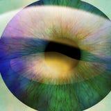 Människaelev Fotografering för Bildbyråer