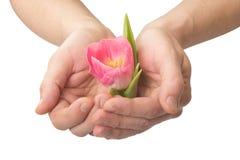 Människahänder med en blomma Arkivbild