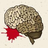 Människahjärna och en tappa av blod Arkivbilder
