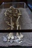 Människan benar ur det Dracula Tepes Vlad huset Royaltyfri Bild