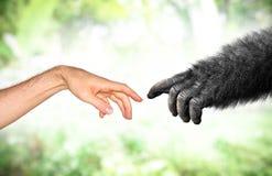 Människan och fejkar apahandevolution från primatbegrepp royaltyfri fotografi