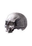 Människaskalle som isoleras på vitbakgrund Royaltyfri Fotografi