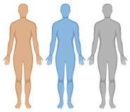 Människokroppöversikt i tre färger royaltyfri illustrationer