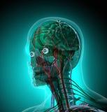 Människokroppen (organ) vid röntgenstrålar på blå bakgrund stock illustrationer