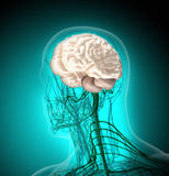 Människokroppen (organ) vid röntgenstrålar på blå bakgrund royaltyfri illustrationer