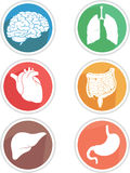 Människokropporgansymbol Arkivfoton