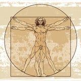 Männliche Anatomie stock abbildung
